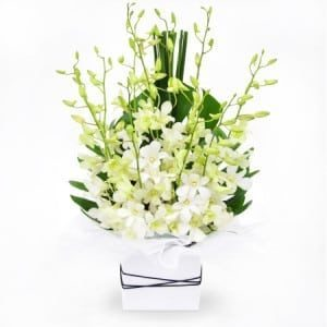 white-orchids-basket